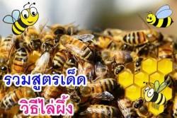 วิธีไล่ผึ้ง (2)