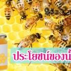 ประโยชน์ของน้ำผึ้งมีอะไรบ้าง? ดูที่นี่ เราจะมาบอกสรรพคุณน้ำผึ้ง ที่รู้แล้วต้องทึ่ง!!