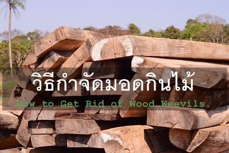 วิธีกำจัดมอดกินไม้