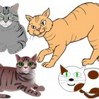 """วิธีไล่แมวไม่ให้เข้ามาบริเวณบ้านของเรา ใช้ได้ผลจริงๆ นะ """" ง่ายด้วย """""""