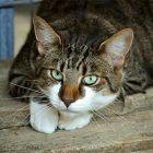 9 วิธีกําจัดกลิ่นขี้แมวให้หมดไป ความรู้ดีดีที่ทาสแมว ควรอ่าน!!